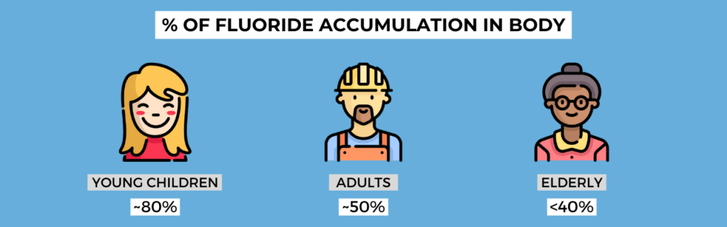 percentage of fluoride that accumulates in the body