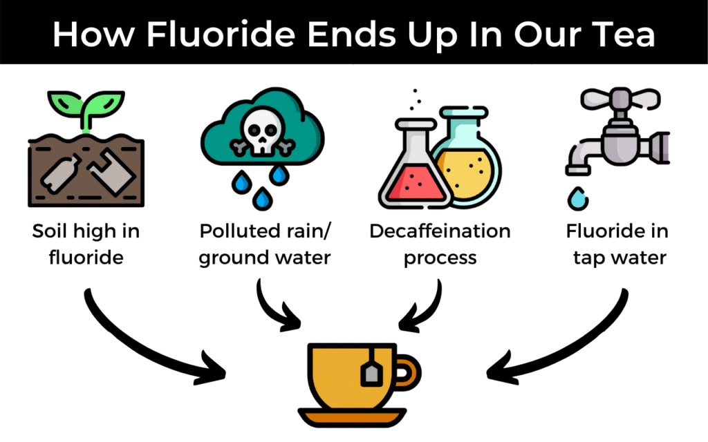 how fluoride ends up in our tea